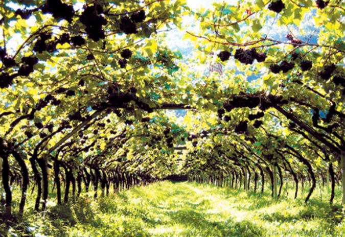 obradoiro viñocultura