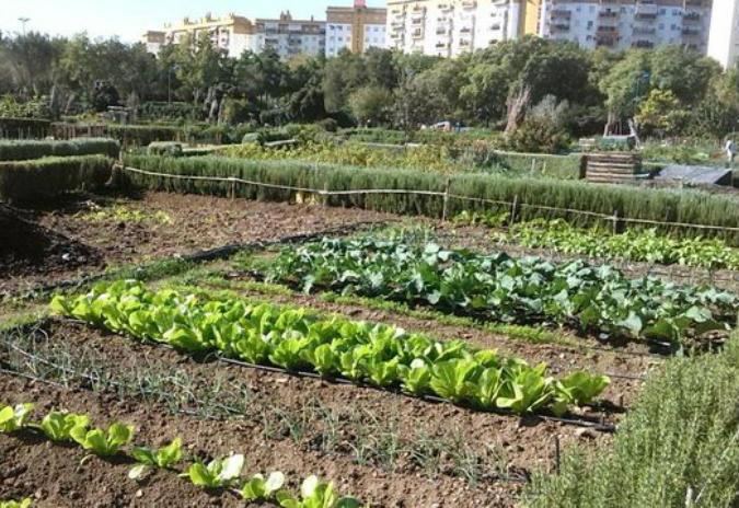 Lugo abrirá o luns o prazo para solicitar as 30 parcelas dos hortos urbanos do Parque dos Paxariños