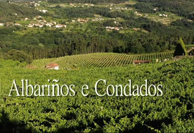 O viño e as adegas de Arbo