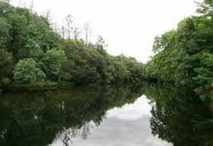 A Consellería de Medio Ambiente propón unha multa polo verquido de sosa caústica no río Tea de máis de 200.000 euros.