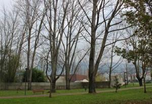 Autarquia pondera substituição de árvores no Castelinho