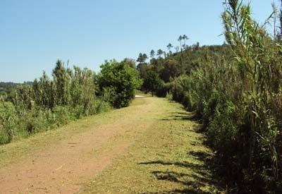 Intervenção na Ecopista e Marginal do Rio Minho