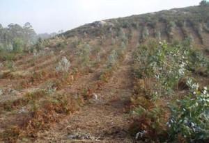 O BNG alerta de que un expediente de obras de desbroces forestais compromete principios de contratación administrativa