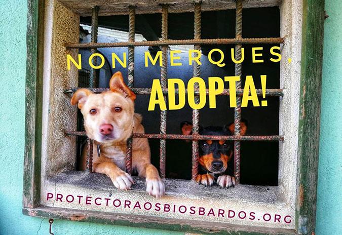 O Concello de Ponteareas apoia á protectora de animais Os Biosbardos con 5.000 euros
