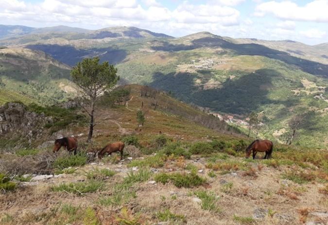 """""""Acontece in Loco – Montanhas do Alto Minho"""", um projeito para a valorização do território"""