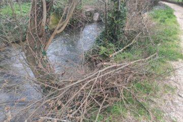 """""""Somos Ribadumia"""" denuncia o mal mantemento das zonas fluviais do municipio"""
