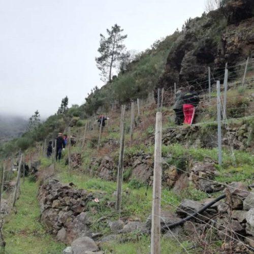 Alumnos do IES Ribeiro de Sober podaron vides nos Chancís