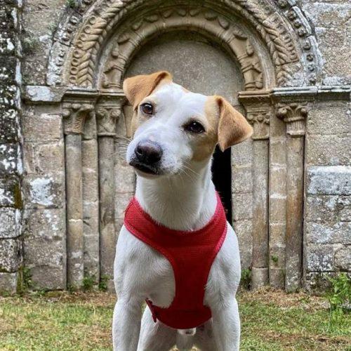 Pipper, o popular can que deu a volta a España, visita Ourense e Lugo