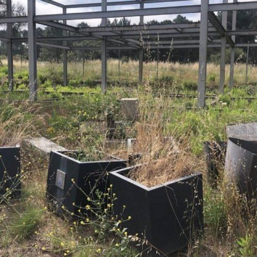 """PSdeG Ourense denuncia o """"estado calamitoso"""" do viveiro municipal"""